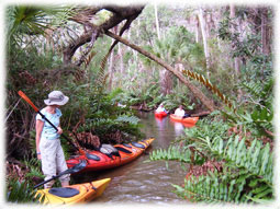 Kayaking on the Chassahowitzka River.